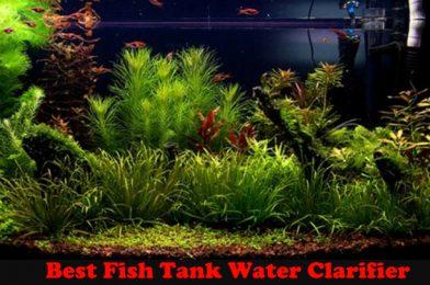The Best Fish Tank Water Clarifier Reviews 2020