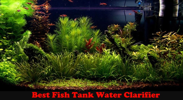 Best Fish Tank Water Clarifier